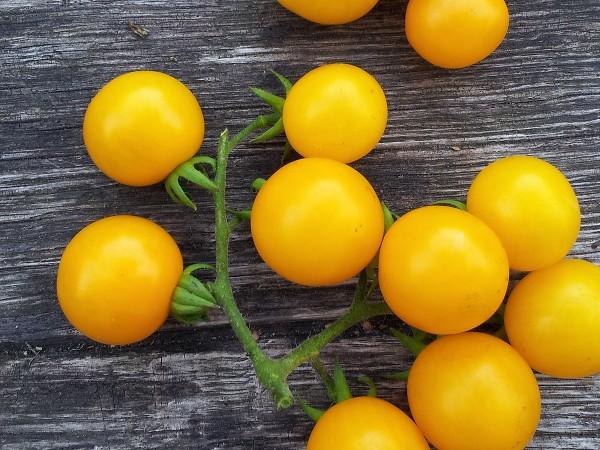 Tomate: Galinas Sibirian Cherry