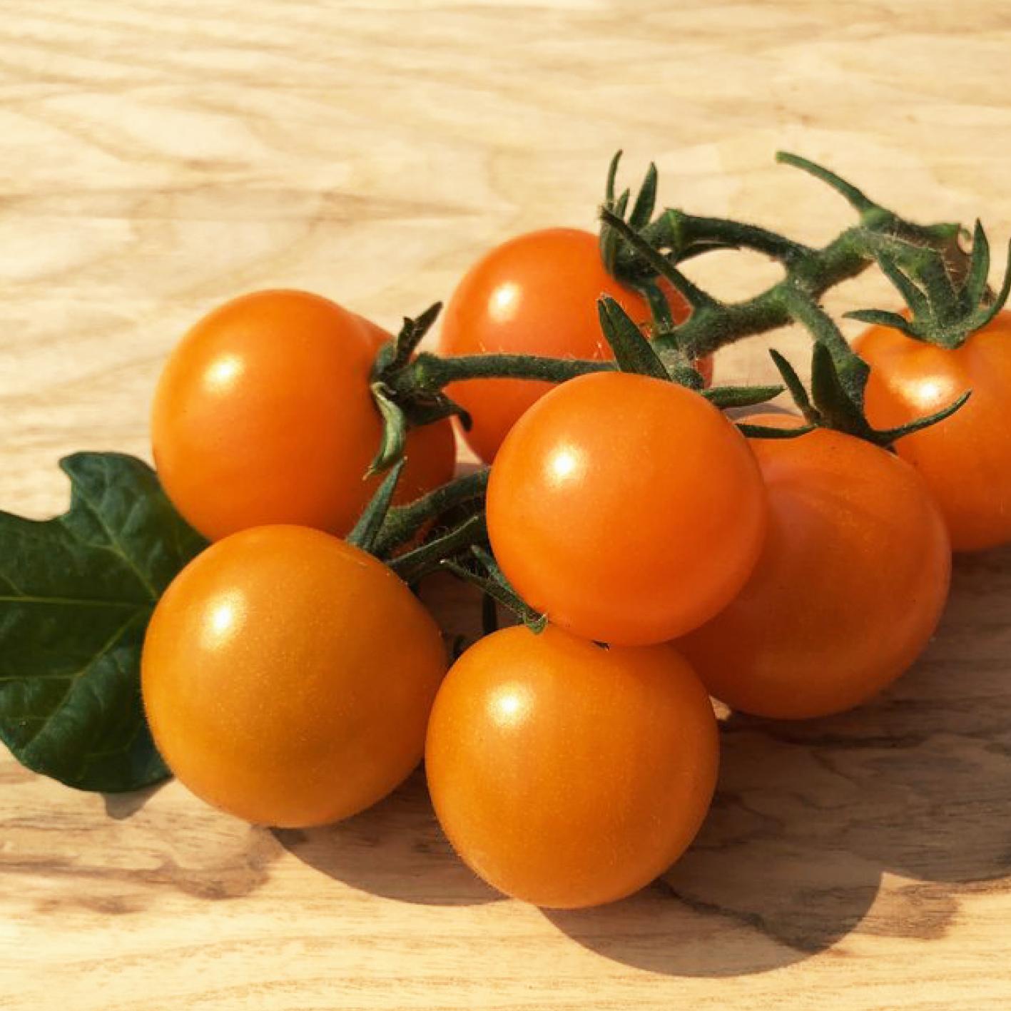 Tomate: Goldita