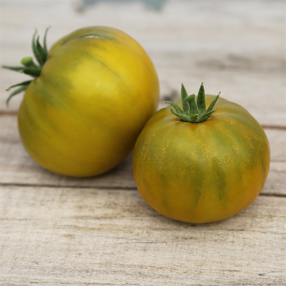 Tomate: Green Pineapple