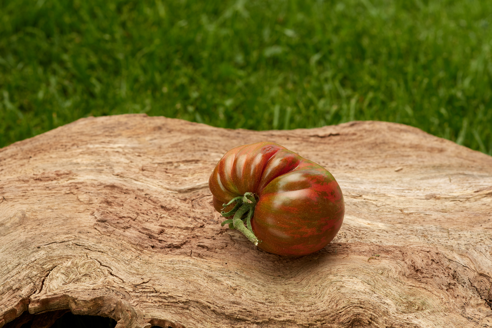 Tomate: Black and Red Boar