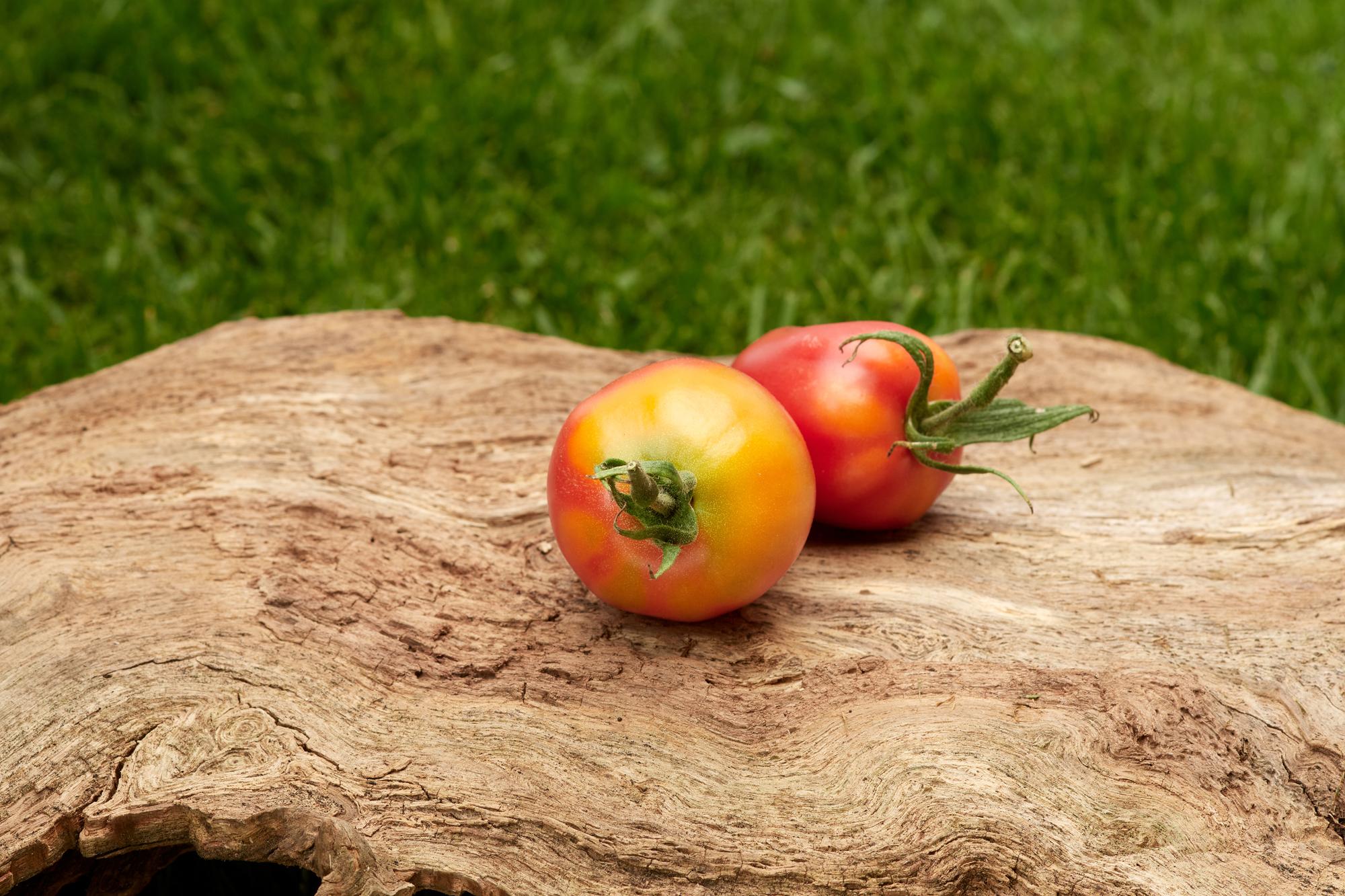 Tomate: Rote Zora