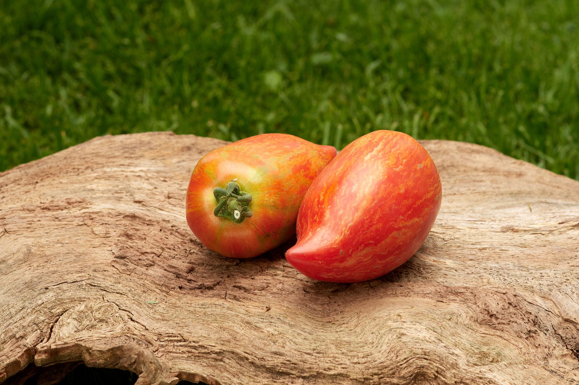 Tomate: Striped Roman