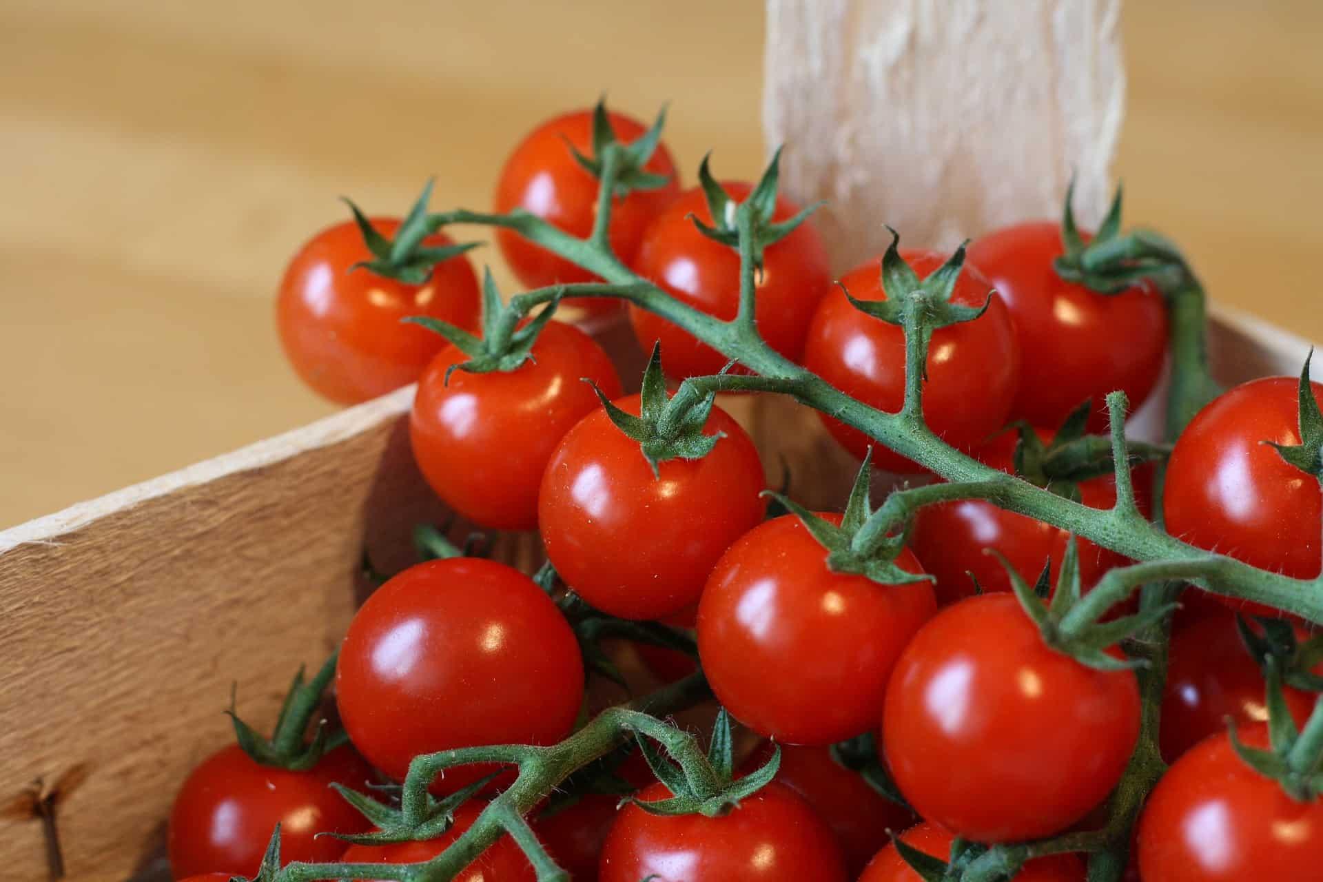 Tomate: Brandywine Cherry