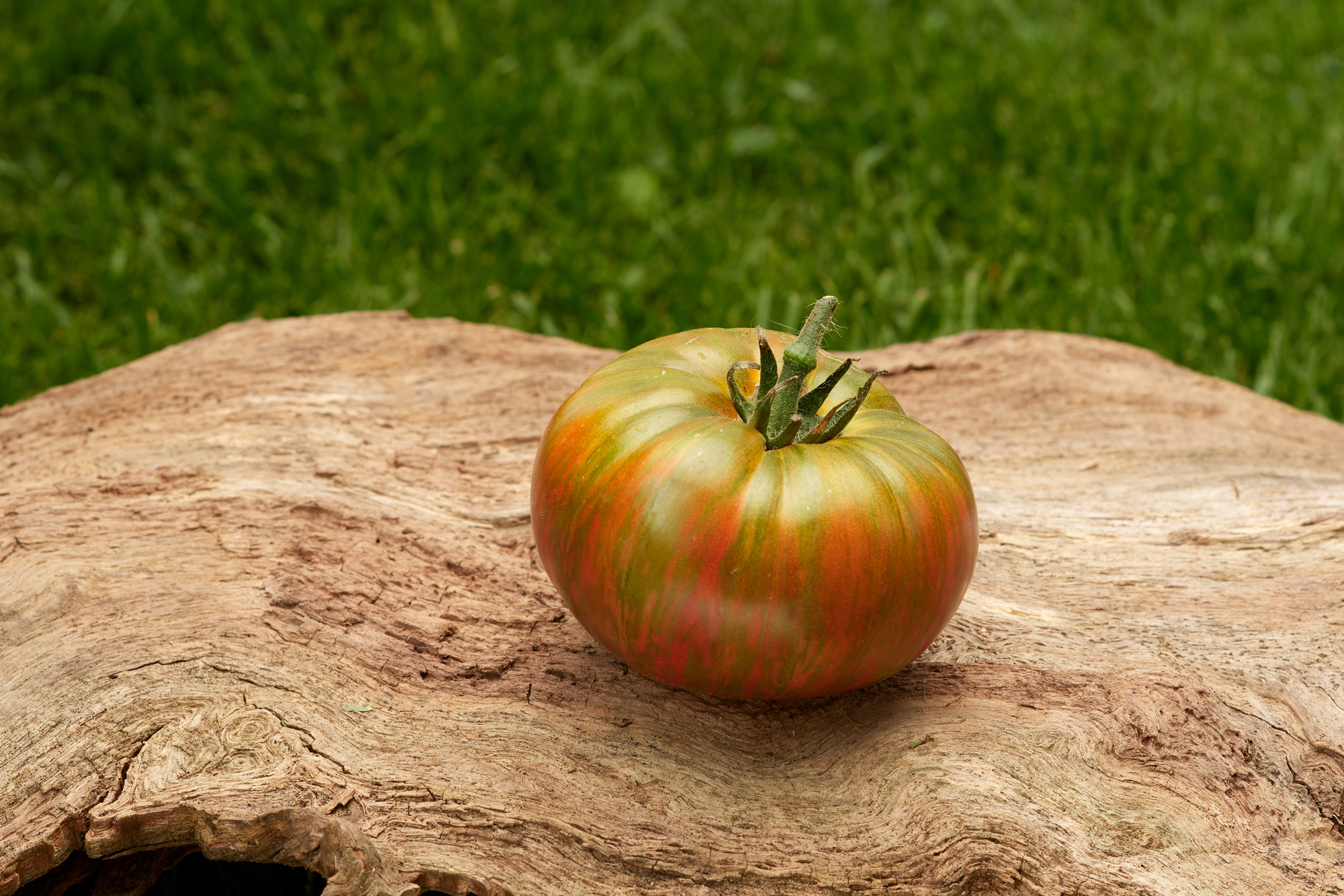 Tomate: Chocolate Stripes