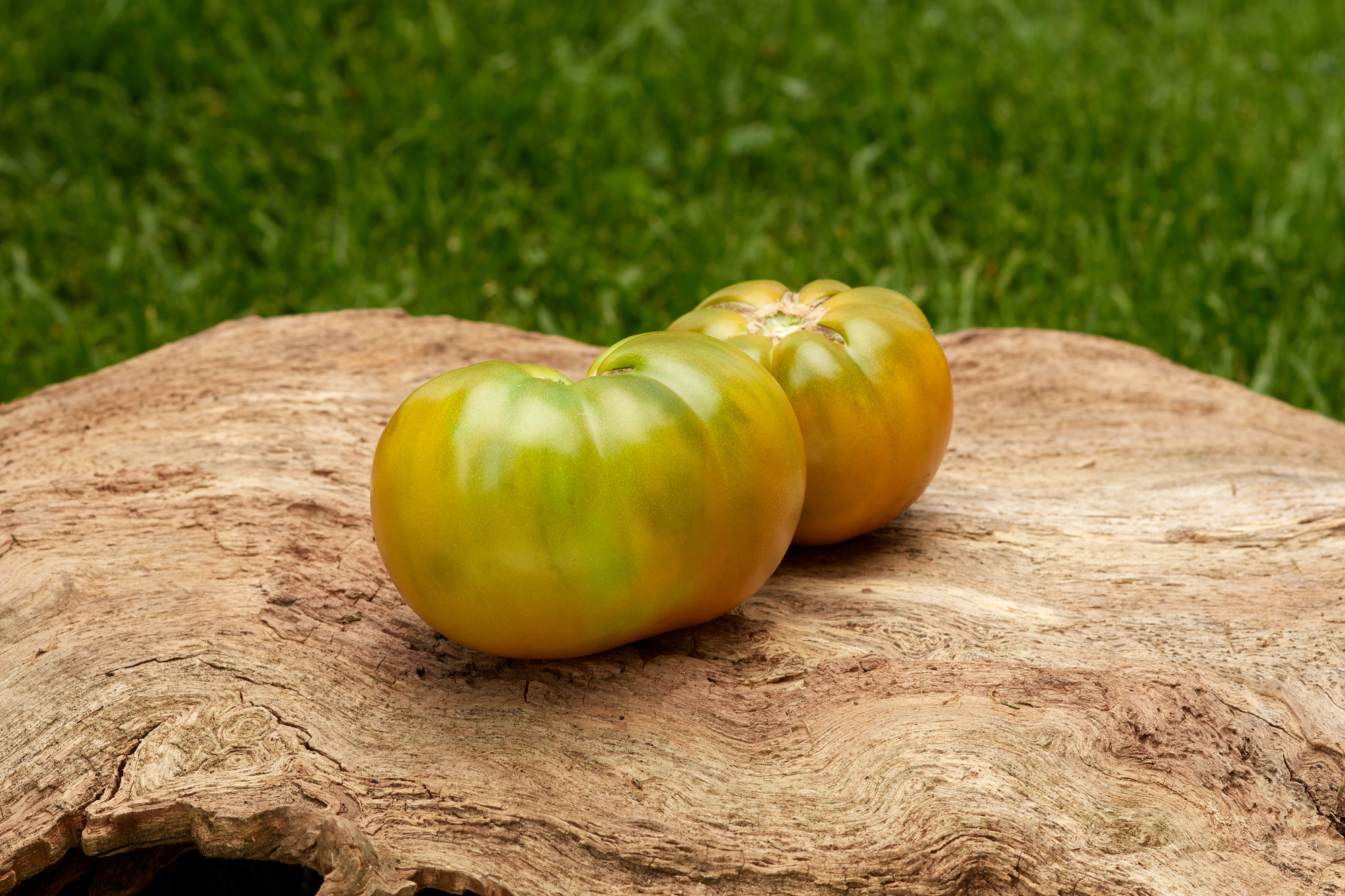 Tomate: Aunt Ruby German Green