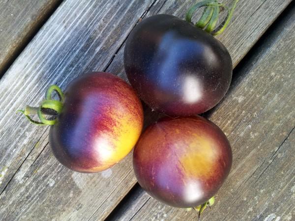Tomate: Blue Orange