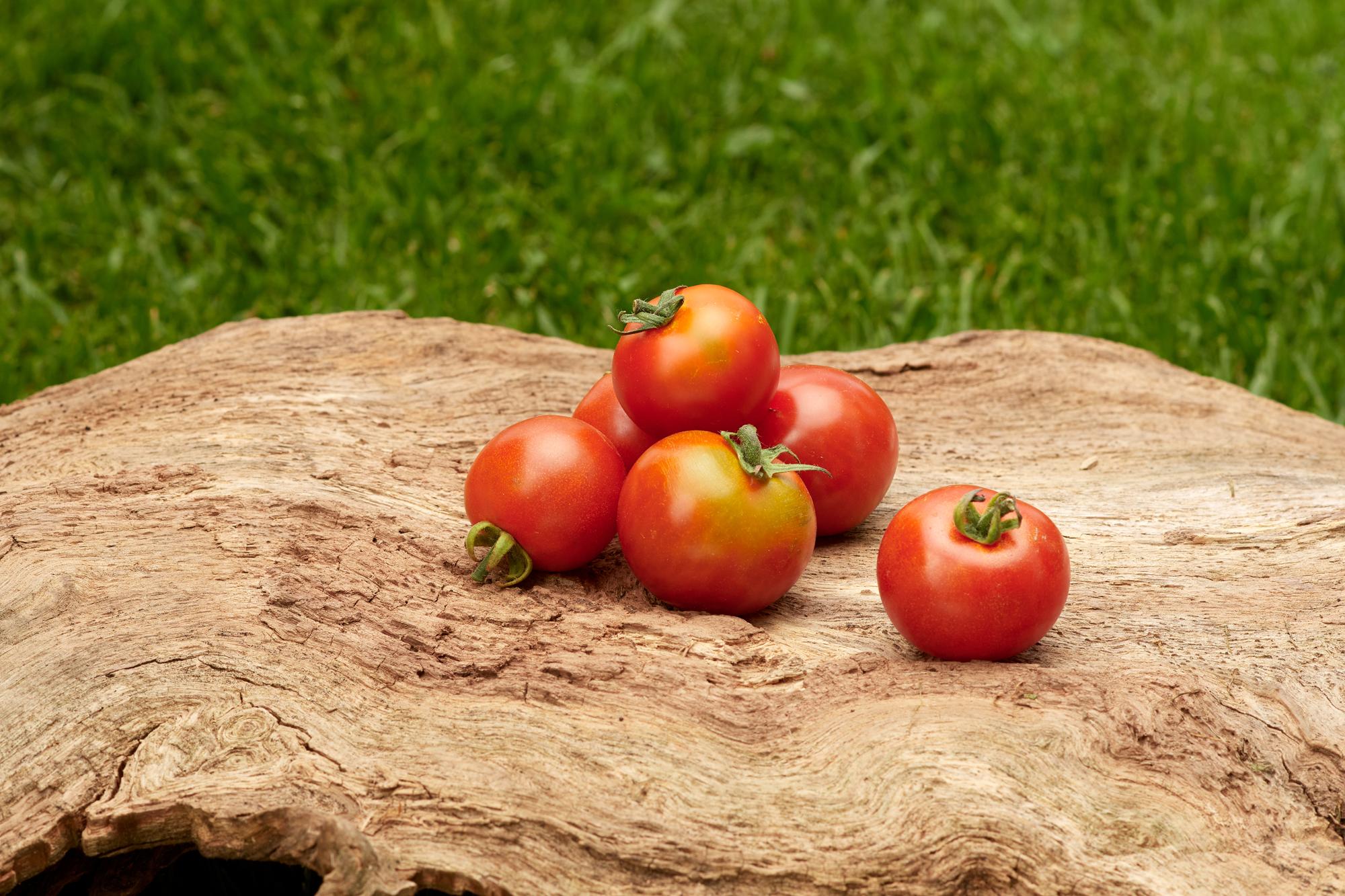 Tomate: Zuckertraube
