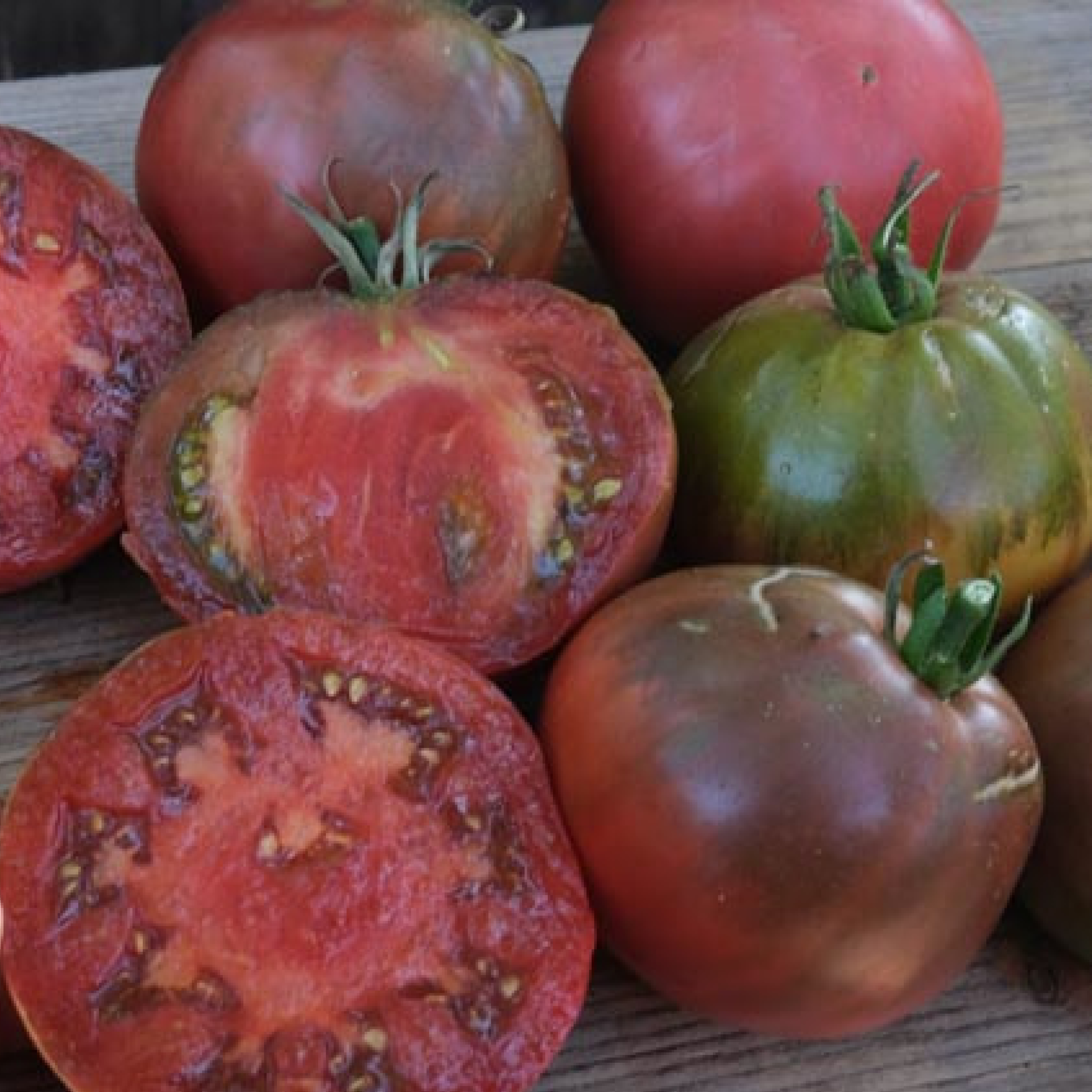 Tomate: Bordovij